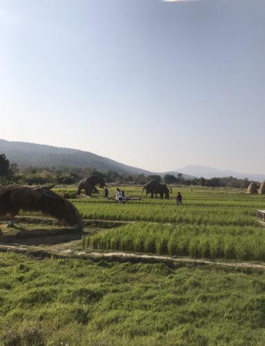 tueng thao近くの稲作地帯の観光スポット
